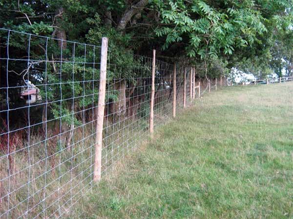Deer fencing game fence livestock fences deer netting for Fishing line deer fence